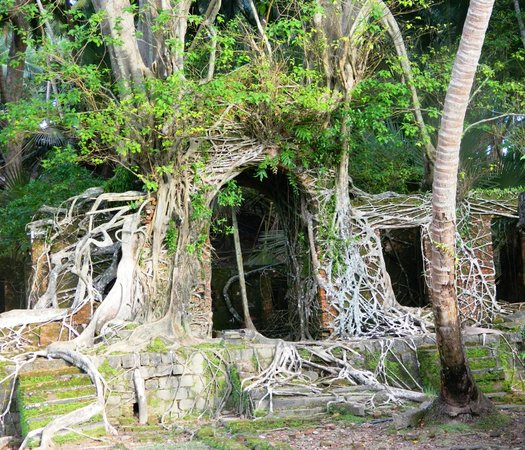 Ross Island:                   British Period building masked by the Roots Its Root art on the canvas of Buil