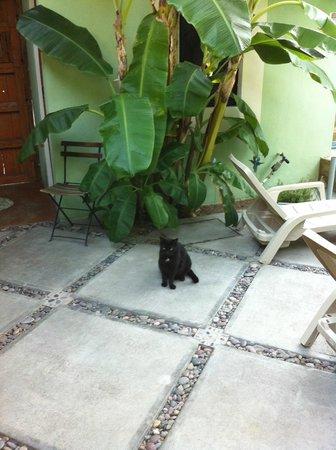 Casa Verde Inn:                   Cat