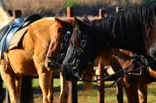 Drakensberg Sun Resort : Horse Riding