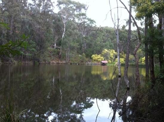 Bingle Tree Retreat: the lake