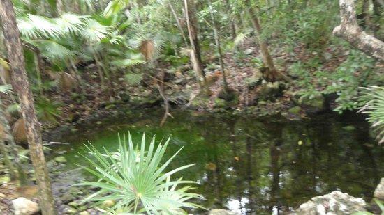 Hotel Barcelo Maya Beach: all'interno del villaggio c'e un cenote....una cosa fantastica