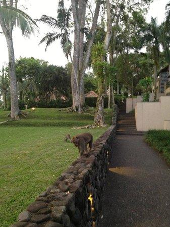 Alila Ubud:                   grounds to our room