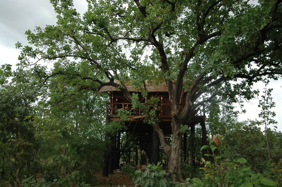 Tree House Hideaway: Tree House