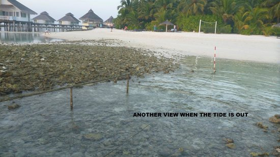 Ellaidhoo Maldives by Cinnamon:                   view of limited beach with  tide out