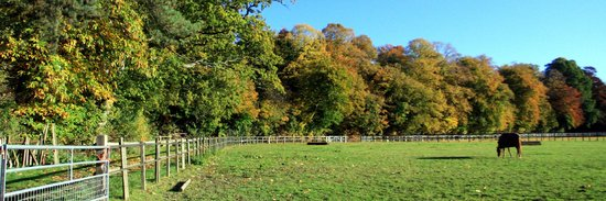 Herons Farm B&B:                   Watching the colours turn at Herons Farm