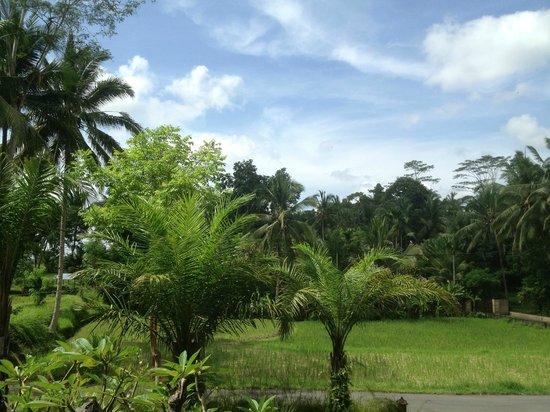 Puri Sunia Resort:                   Frühstücksaussicht