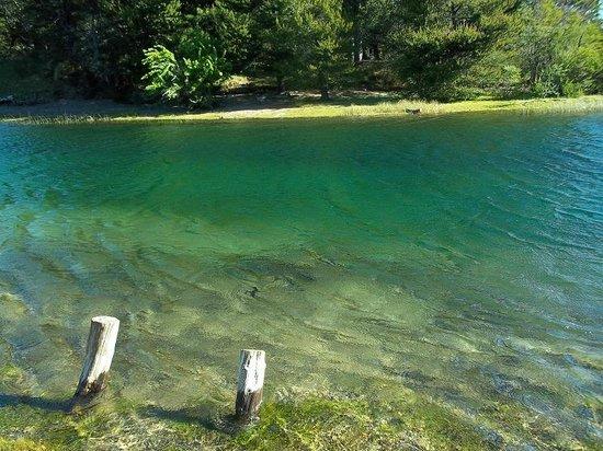 Lago Alumine: Río Quillén, contaminación cero.
