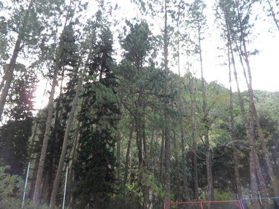 Cabanas Kucikas: Vista frontal desde la cabaña 6