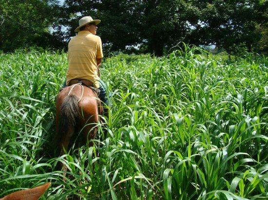 Hacienda La Isla Lodge:                   paard rijden bij Diego