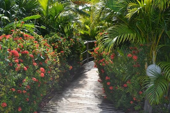 HOTEL CAP MACABOU: les jardins en allant vers la piscine