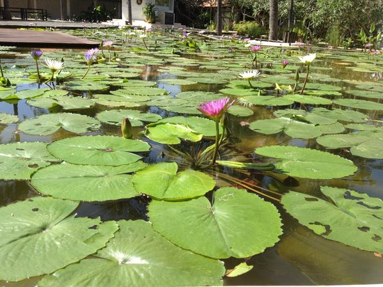 Evason Hua Hin: The pond by the Kieng Sah restaurant