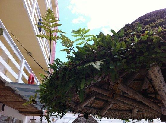 Capao Da Canoa Mar Hotel :                   vegetação nos umbrellones