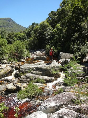 Tsitsikamma Lodge:                   Rivertrail