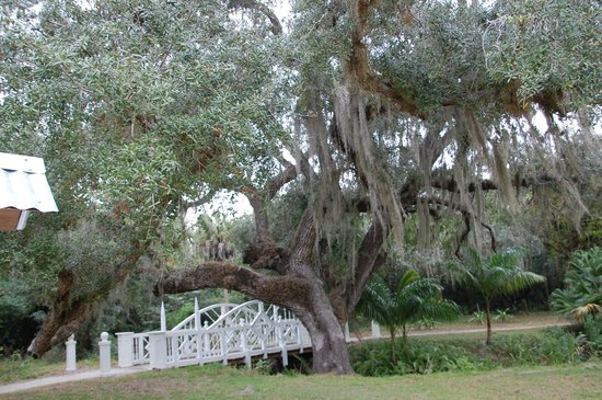 Koreshan State Historic Site:                   One of the bridges and a live oak