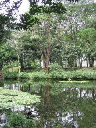 Jardin Botanico de Medellin: En el lago