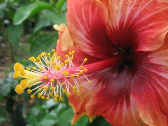 Jardin Botanico de Medellin: Cayena