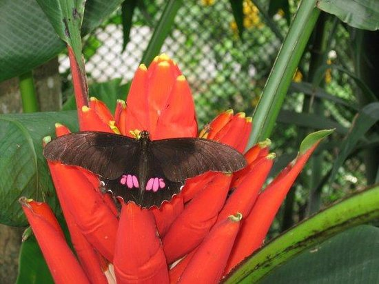 Jardin Botanico de Medellin: El mariposaurio.