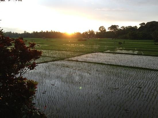 Tegal Sari: sunset