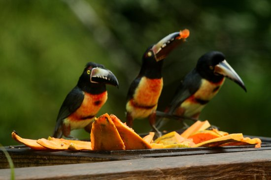 Crystal Paradise Resort: Enjoy these birds while having breakfast at Crystal Paradise