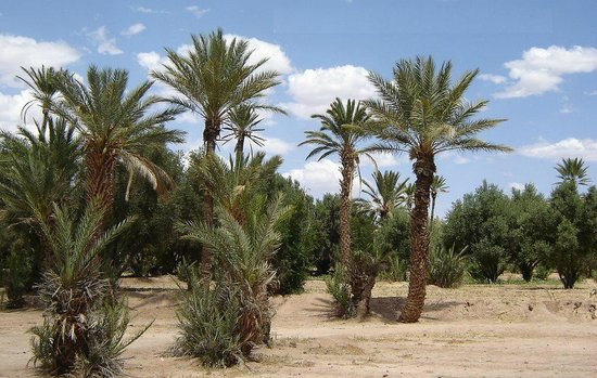 Espace Kasbah Amridil: Oasis de Skoura.