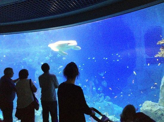 Tregoad Park: Plymouth Aquarium