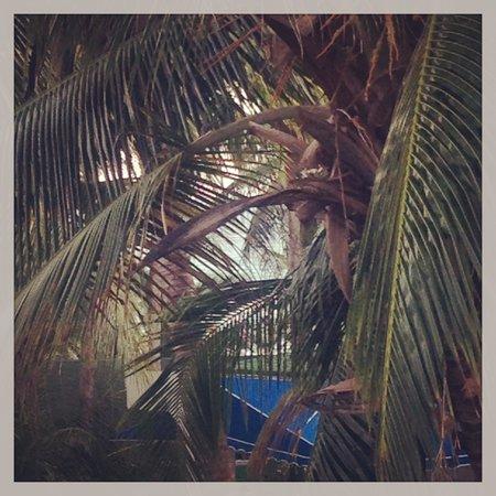 Decameron Marazul :                   View