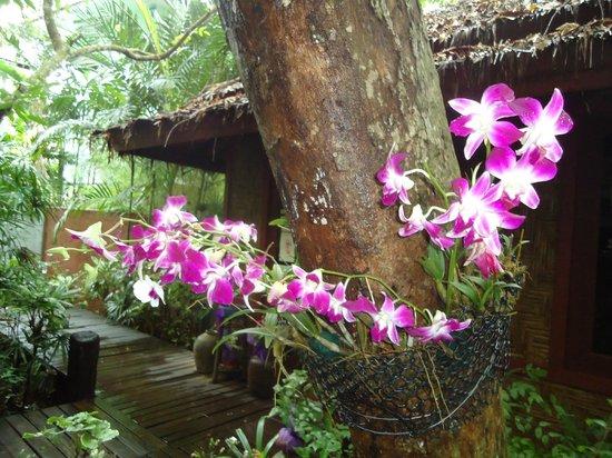 Somkiet Buri Resort: Flora