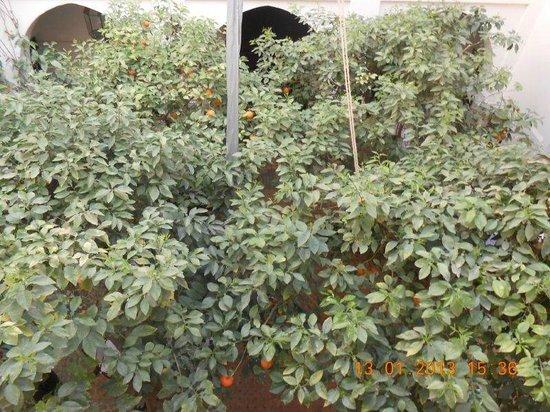 Riad Dar Dialkoum: view