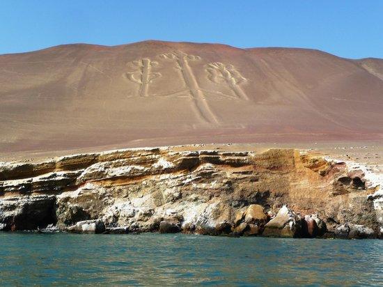 Humboldt Penguins Picture Of Paracas National Reserve