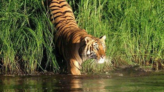 Sundarban: Home of Royal Bengal Tiger