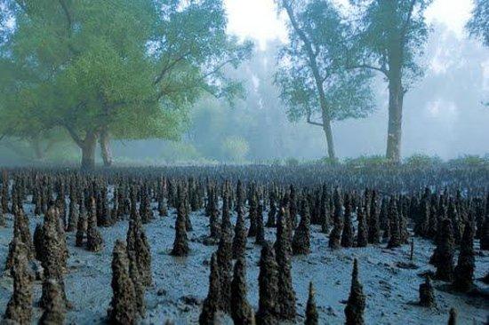 Sundarban: Mangrove Forest