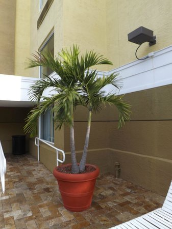 SpringHill Suites Fort Lauderdale Airport & Cruise Port:                   pool area