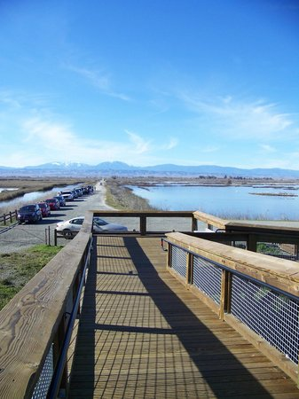 Sacramento National Wildlife Refuge:                   Looking down the ramp from viewing platform