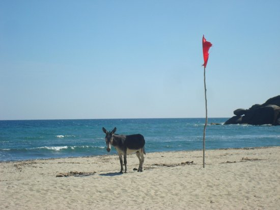 Tayrona National Park, Colombia:                   Colombian life guard