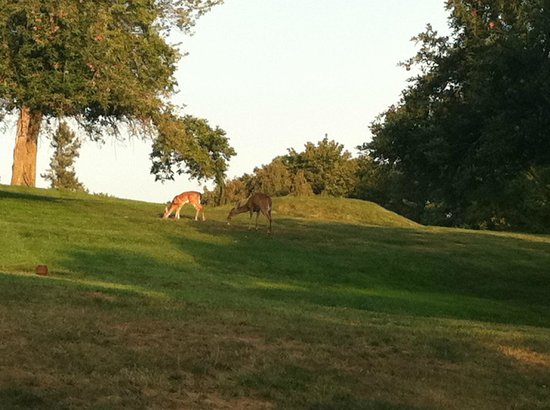 Tarrytown House Estate on the Hudson:                   deer