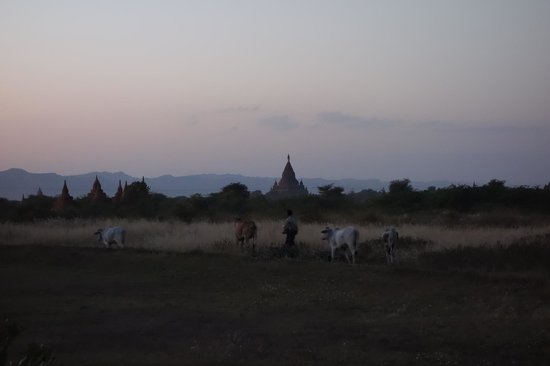 Kumudara Hotel Bagan:                   View from our junior suite on the first evening