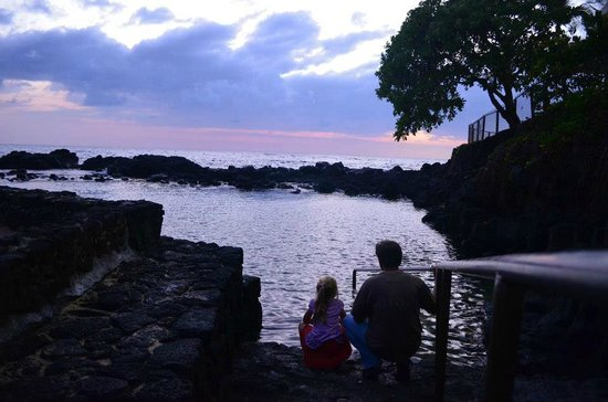 Royal Kona Resort:                   lagoon at sunset