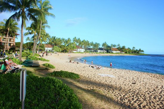 Kiahuna Plantation Resort:                   Poipu beach