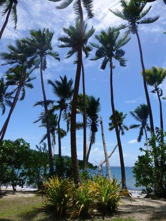 Dolphin Bay Divers Retreat : Coconut trees