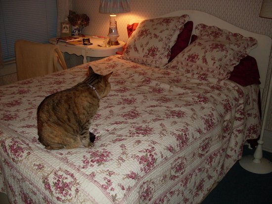 Sylvia Beach Hotel:                   Jane Austen Room (with Shelley the Cat)