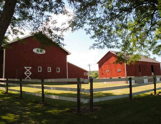 Springdale Farm:                   The grounds and barns