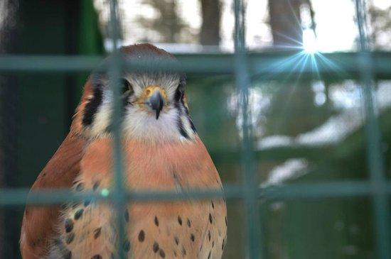 Adirondack Wildlife Refuge: One of the birds at Refuge