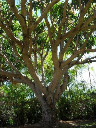Aston Maui Hill:                   sdfa