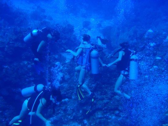 Cayman Marine Lab:                   Underwater with Tom & CML Crew