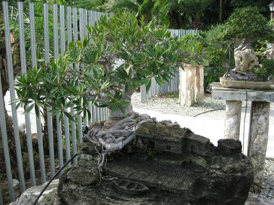 Bonsai at Heathcote Botanical Gardens