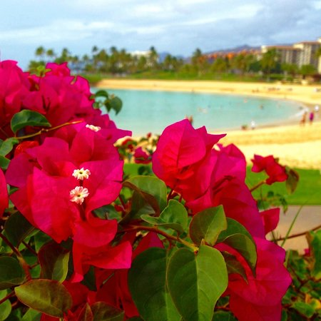 Marriott's Ko Olina Beach Club:                   Marriott KoOlina Beach Cove from walkway