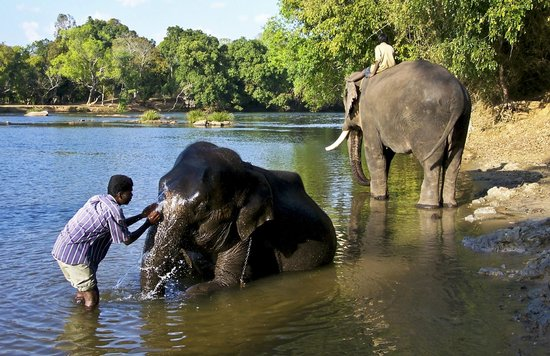 Elephant camp near the banks of Cauvery - Reviews, Photos - Dubare ...