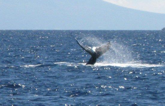 Aston Maui Kaanapali Villas:                   whale tale