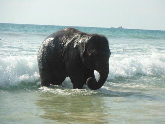 Angsana Laguna Phuket:                   Lucky no seu banhito
