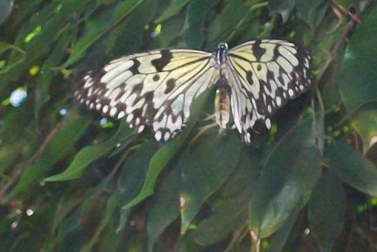 The Butterfly Farm (La Ferme des Papillons): Another pretty one